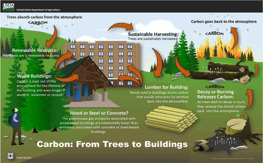 Carbon from trees to buildings infographic